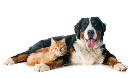 dog_and_cat_1